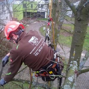 Baumpflege beim Bildungswerk Südhessen durch Bachmann + Schumacher GmbH